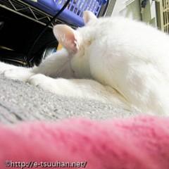 猫(ミア) 手術後の写真